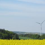 Agro druzstvo Rozstani - pole repky s pohledem na vetrnou elektrarnu