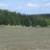 Agro Rozstání - zpracované seno v kulatých balících na poli