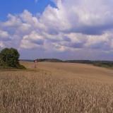 Agro druzstvo Rozstani - tri kombajny za sebou